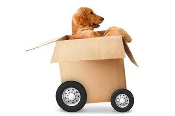 Free Box Delivery Service